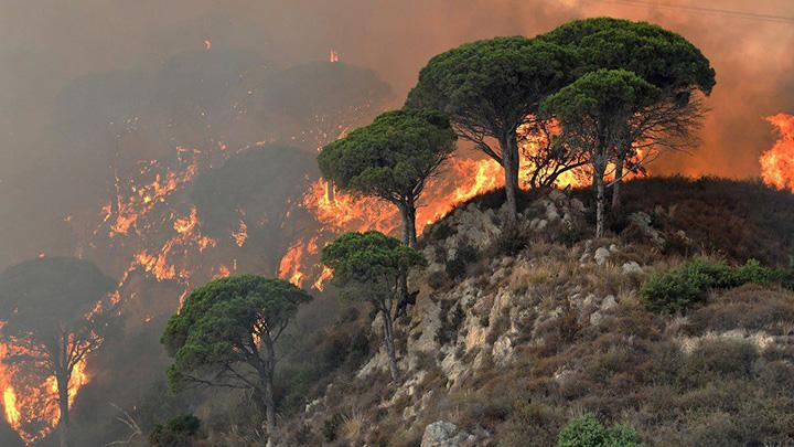 Incendi, con Legambiente vicini ai territori colpiti